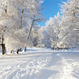 WinterSC